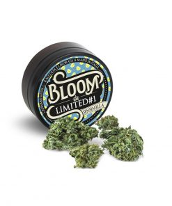 bloom limited