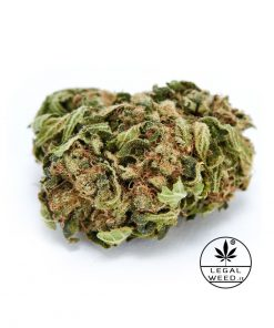 DON PEDRO 1 web 247x296 - Don Pedro Legal Weed® | CBD 25% | 1,5gr – Cannabis Legale