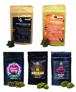 cannabe cbweed 247x296 - PACK CBWEED & CANNABE - Cannabis legale light