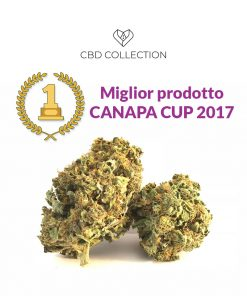 seed of love italian kiss 247x296 - CBD COLLECTION Italian KISS | CBD 11% | 2gr | Cannabis legale